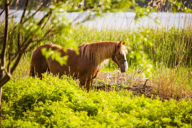Horse grazing freely in a rural scene with a river