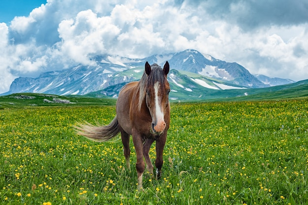 山の谷、ラガナキ、ロシアでの馬の放牧