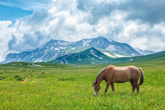 山の谷で放牧している馬