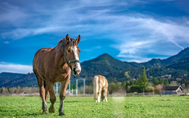 Horse in grazing land