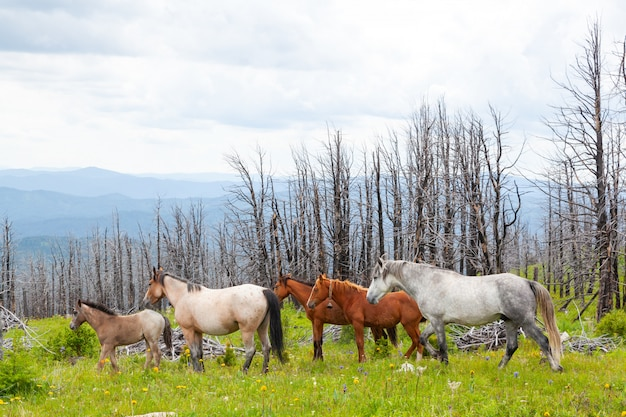 Horse grazing on mountain green mountain valley. perfect rock landscape. sunny meadow with gray and brown horses running