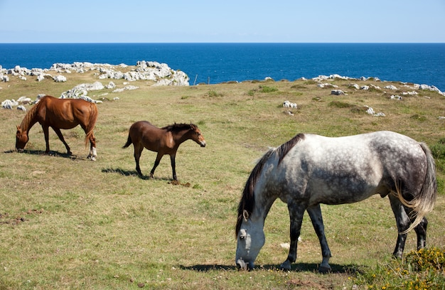 Horse grazing in the mountains of nueva de llanes in spain