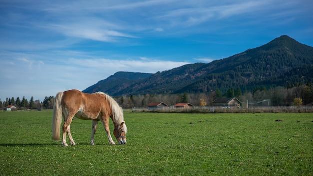 Horse in green field