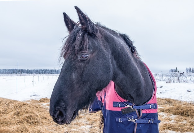 담요에 말은 겨울에 건초와 목장에 서