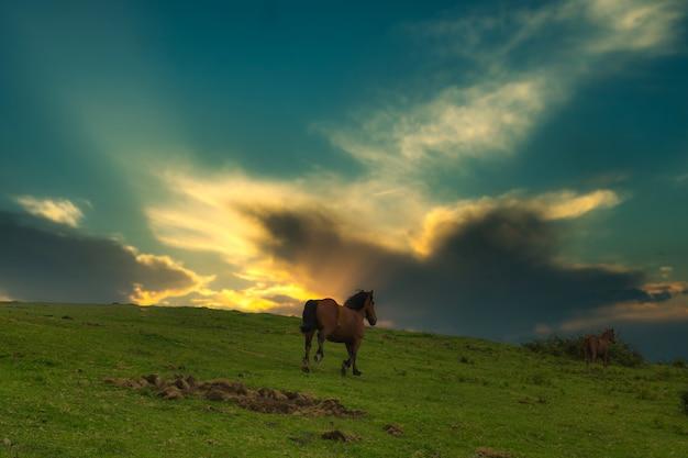 Лошадь на свободе в кантабрии