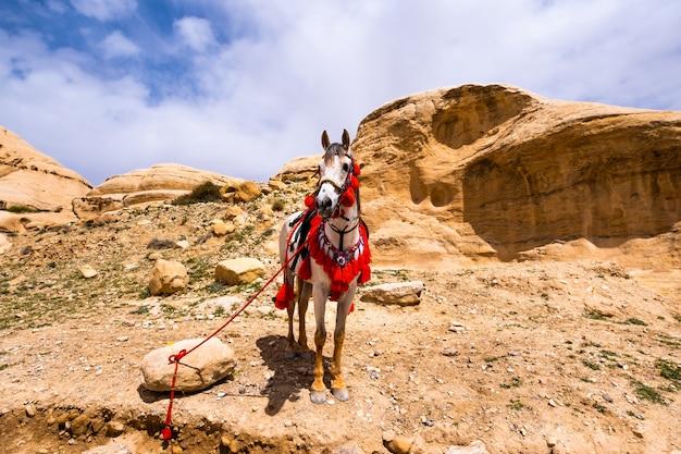 砂岩の谷の馬