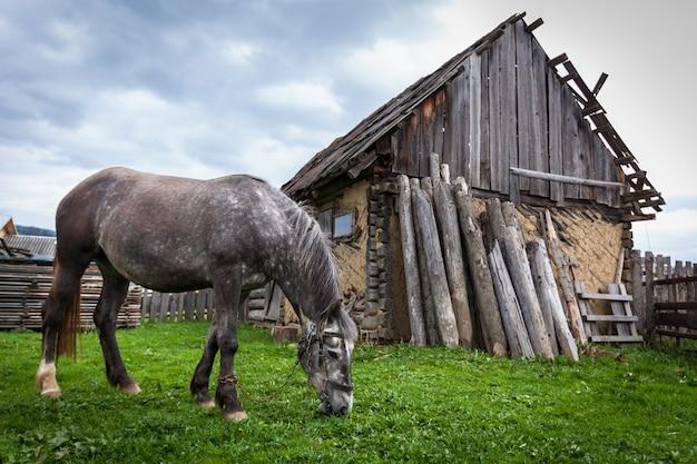 Лошадь в деревне. заковылял серая лошадь возле старого дома в сельской местности. лошади яблоко, прикованная лошадь, цепь, руины, серый, природа, бедность, невзгоды, жалость к себе, отчаяние, благополучие животных