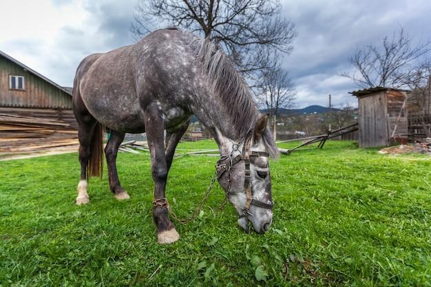 시골에 있는 말 시골에 있는 오래된 집 근처에 멈춘 회색 말