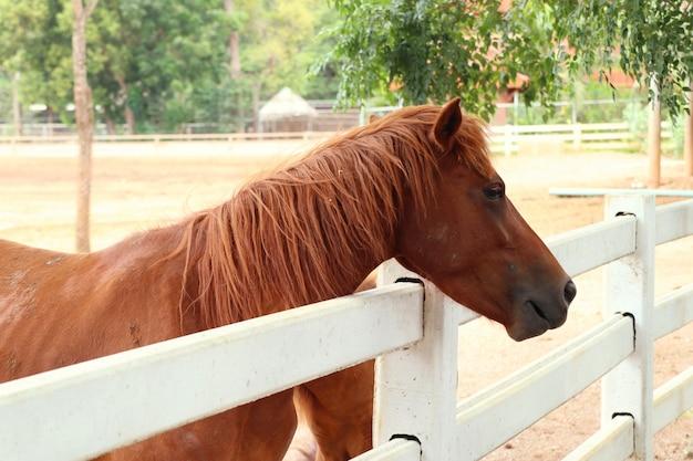 Лошадь на ферме