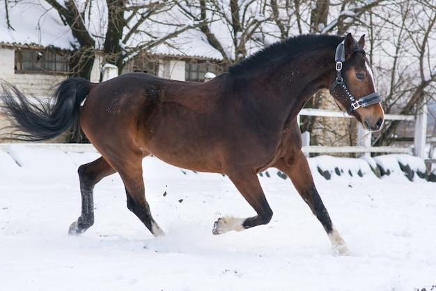 Лошадь зимой в снегу за городом в поле