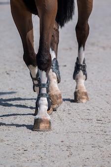 Horse legs on dirt