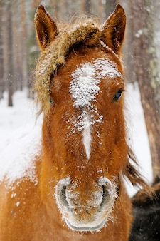 カメラを見て馬