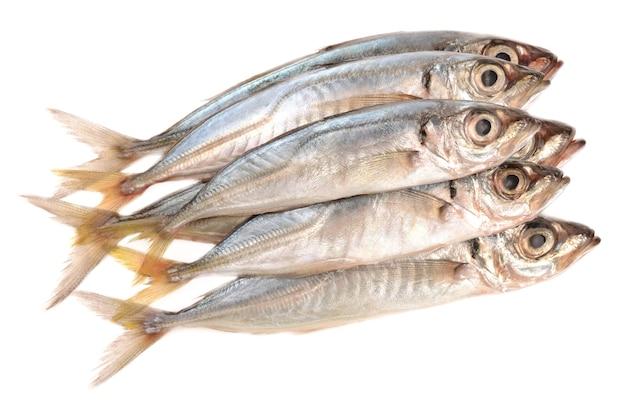 Horse mackerel on a white background