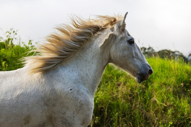 Horse on the meadow in summer