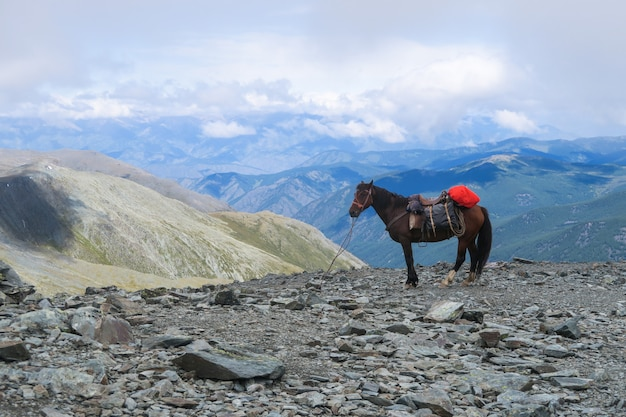 Horse on the mountain pass karaturek scenic view in altai mountains, russia