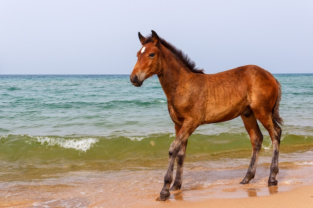 Horse near the water