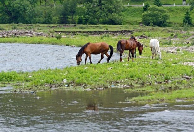 山を背景に馬