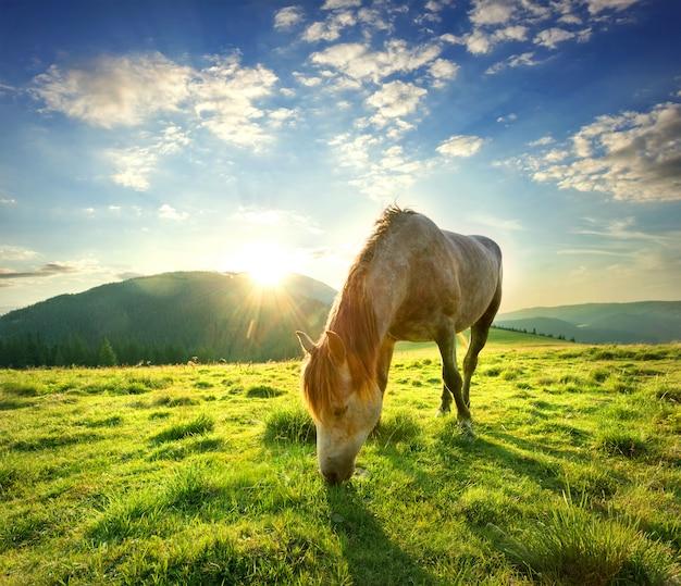 Лошадь на горном пастбище
