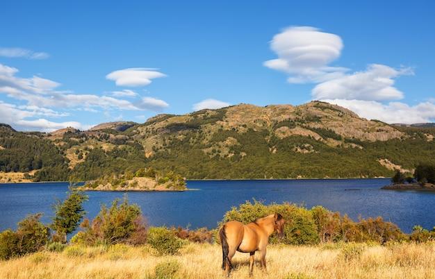南アメリカ、チリの牧草地の馬
