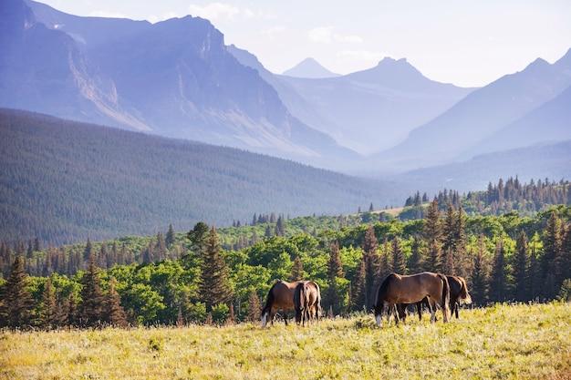 南米チリの牧草地の馬