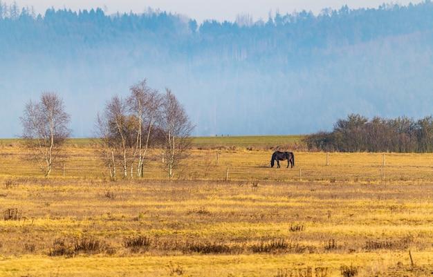 遠くの牧草地の馬、冬