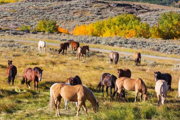 山の牧草地の馬、秋の季節