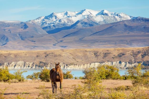 ニュージーランドの山の牧草地の馬