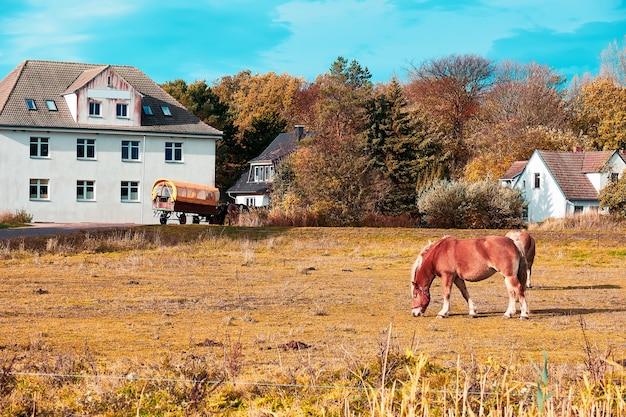 ドイツ北部のヒデンゼー島のヴィッテ村の野原に馬。