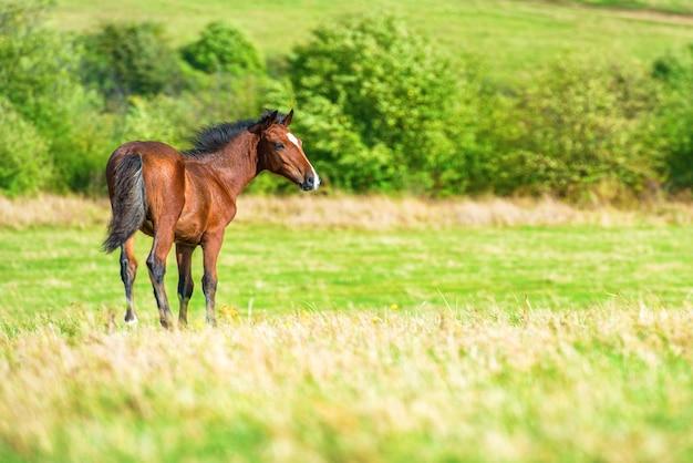 Лошадь на зеленом поле фермы с травой Premium Фотографии
