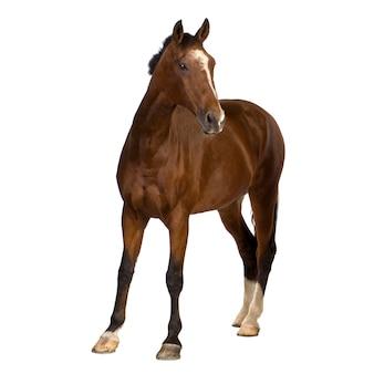 Лошадь на белом