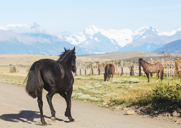 Horse on pasture in chile, south america