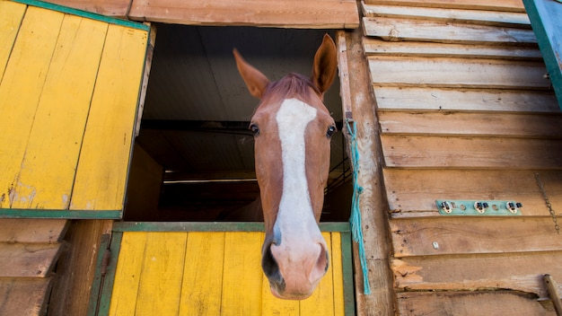 Horse peaking on stable