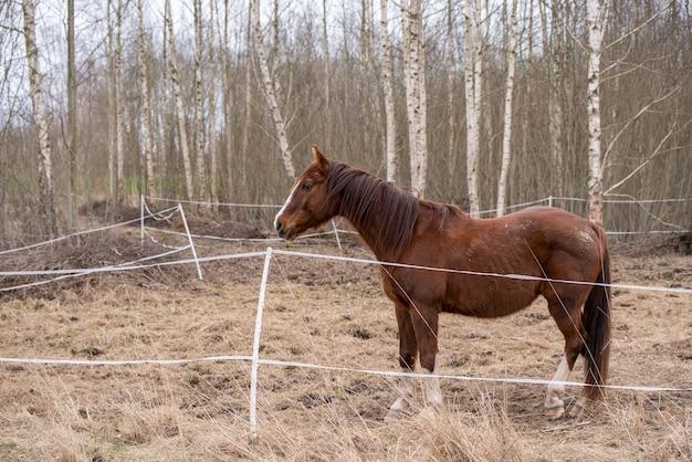 Профиль лошади на природе