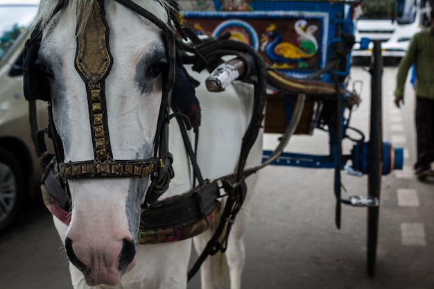 Horse pulling a carriage close up