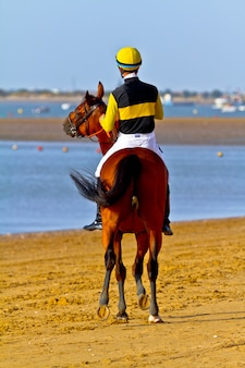 Horse race on sanlucar of barrameda, spain