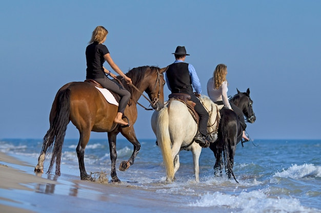 Horse riders in the sea