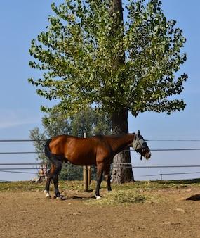 Верховая езда в деревне