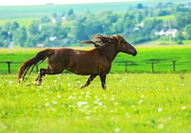 馬が草の春の畑を横切って走る