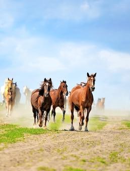Horse runs gallop on the field