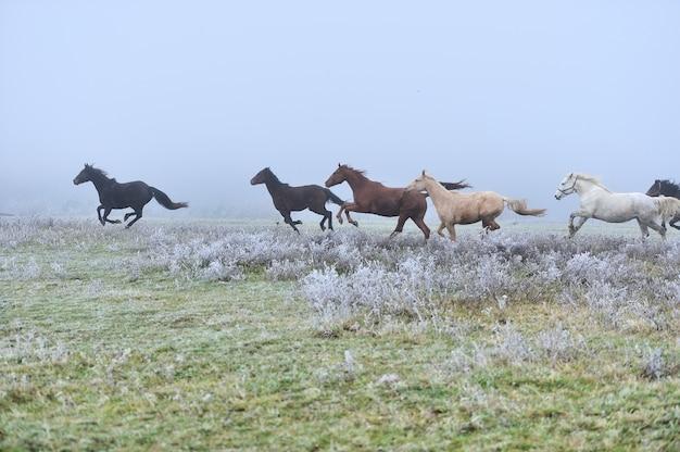Лошадь бежит галопом по туманному полю