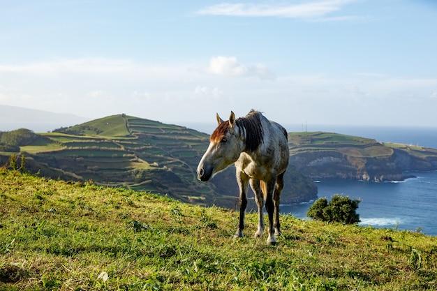 Horse on shore of ocean.