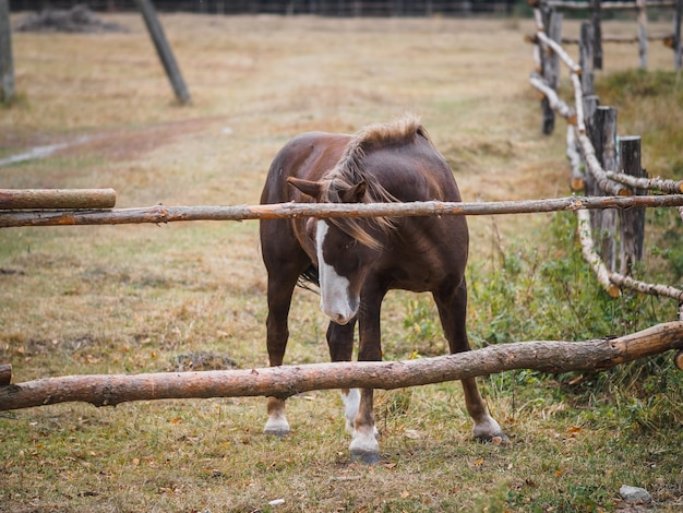 The horse stands in an aviary on the field Premium Photo