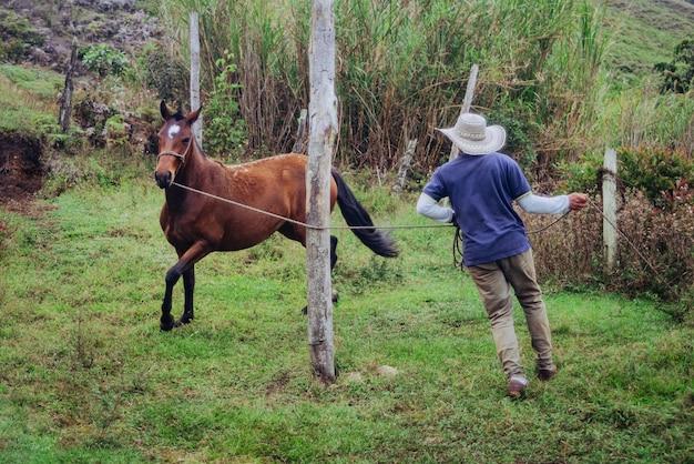 Тренер работает на лошади, чтобы приручить ее
