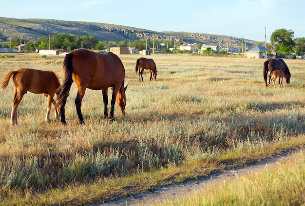 Horse with small foal in preirie pasture
