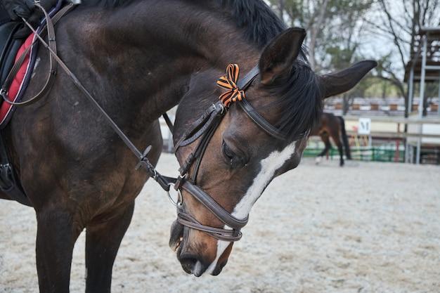 Лошадь с георгиевской лентой