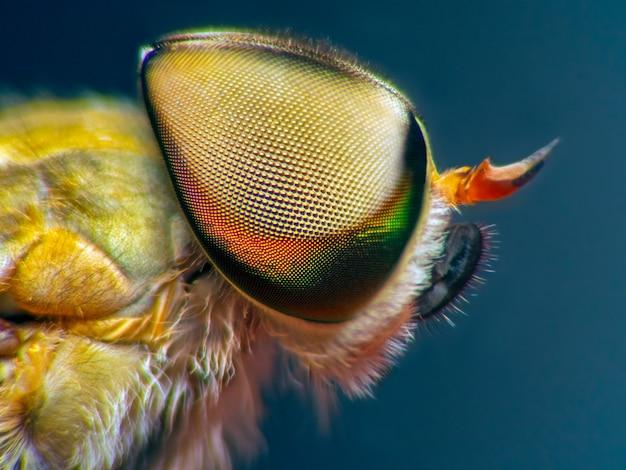 Horsefly macro view