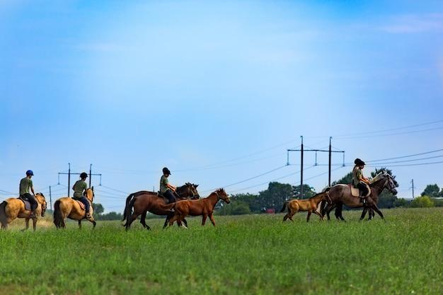 필드에서 승마. 말에 사람들의 그룹입니다. 푸른 잔디와 푸른 하늘 배경입니다.