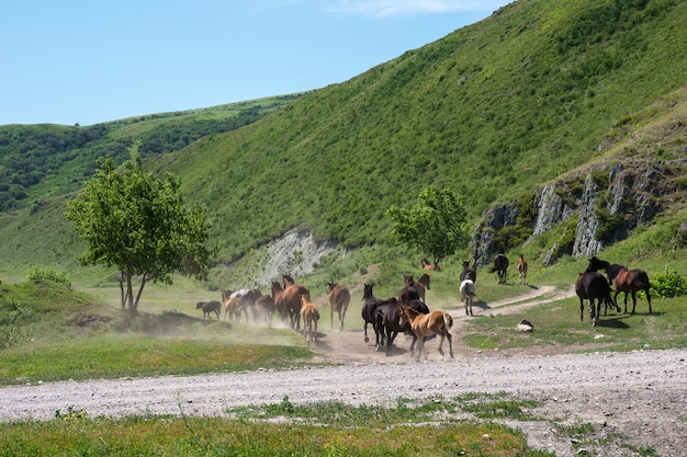 Horses are racing along the mountainous terrain past the tree. herd. stallions and foal.