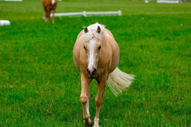 Лошади на конной ферме в золотой час. деревенский летний пейзаж.