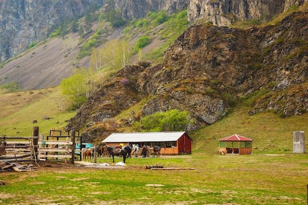 Лошади на конной ферме. сельский пейзаж